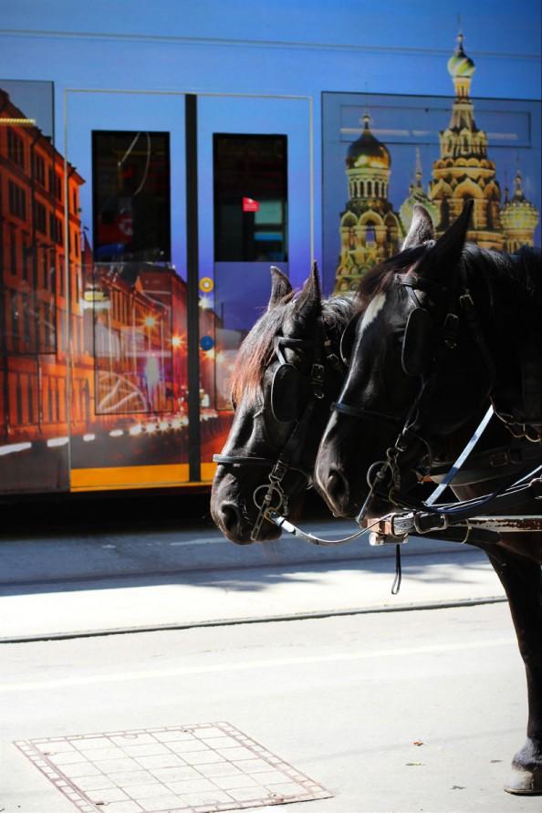 horses, melbourne tram